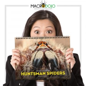 2018 Calendar – Huntsman Spiders