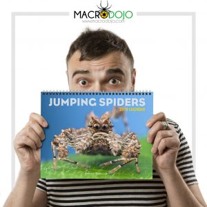 2018 Calendar – Jumping Spiders