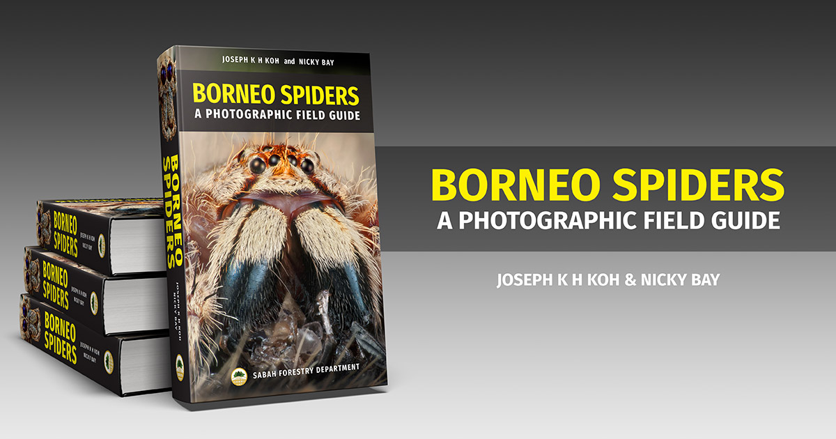 Borneo Spiders: A Photographic Field Guide